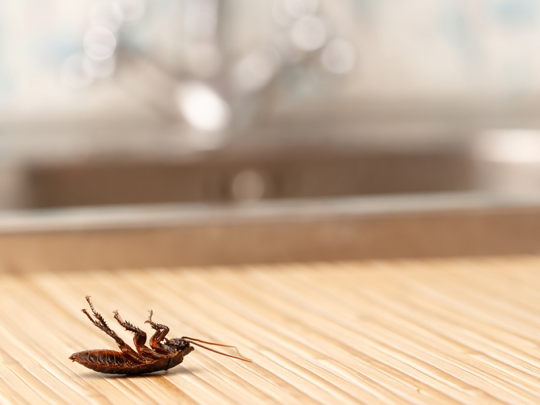 Solve Your Insect Problem Quickly