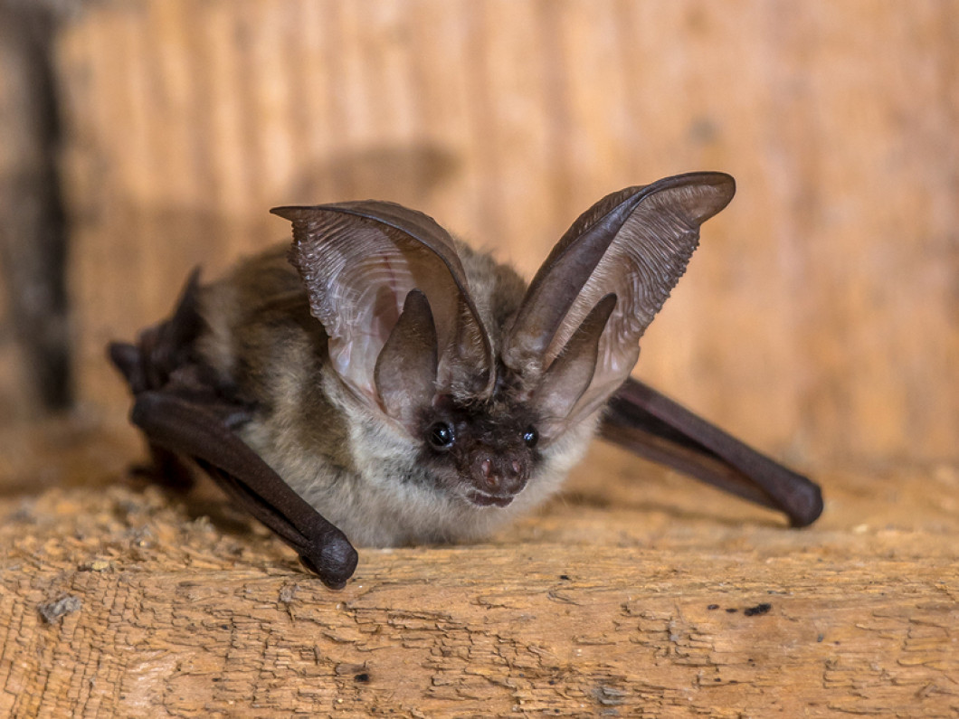 Don't Let Birds or Bats Take Over Your Attic
